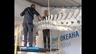 В Музее Мирового началась установка скелета серого кита