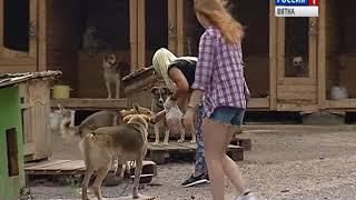 В Кирове прошла выставка бездомных собак (ГТРК Вятка)