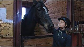 Отличившимся в этом сезоне меринам разрешили не участвовать в Кубке Югры по конному спорту