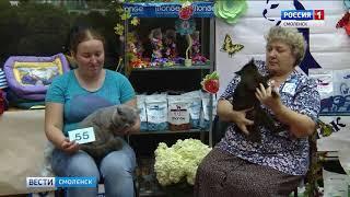 В Смоленске прошла международная выставка кошек