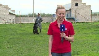Корреспондент «Вестей» побывала в школе по подготовке специалистов-кинологов