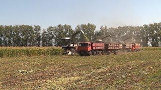 Скосили и посеяли: сельхозартель «Свободный труд» завершила уборку зерновых.