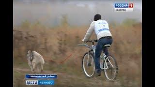 В Ивановском районе прошли гонки на собаках