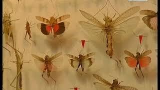 о бабочках детям