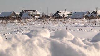 Две собаки и лиса – в Мордовии зафиксированы новые случаи бешенства