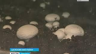 Единственная от Урала до Дальнего Востока ферма шампиньонов работает в Шелеховском районе