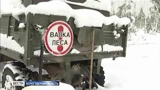 16 нарушителей правил транспортировки древесины выявили в Сокольском районе