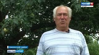 В Смоленском районе вырос небывалый урожай фруктов