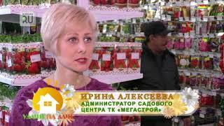 Хосты на Урале растут