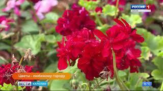 Анонс Цветы любимому городу
