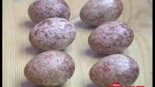 Китай Шэньси редкие ибисы воспроизводства фрагменты фильма CCTV10