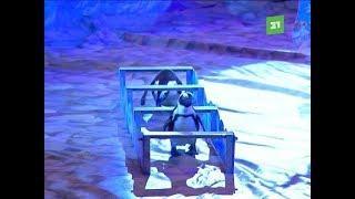 Единственные в мире дрессированные пингвины покорили челябинских зрителей