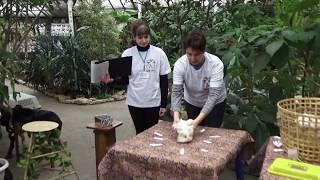 Животные воронежского зоопарка предсказывают погоду.
