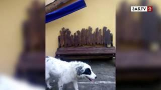 В парке Дома офицеров хозяйничают бездомные собаки