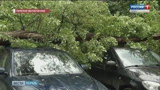 Ураган в Перми: поваленные деревья и оборванные провода