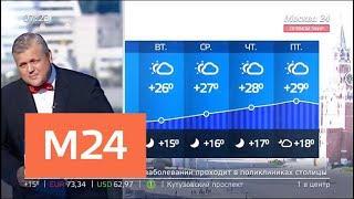 """""""Утро"""": идеальная погода установилась в Москве - Москва 24"""