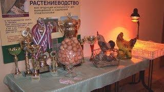 Ставропольские птицеводы собираются обеспечить жителей региона яйцами местного производства.