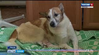 Жители Бийской в Пензе против переезда приюта для животных в новое здание