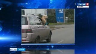 Собака-экстремал из Томска стала героем соцсетей