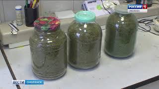 Более тысячи наркопреступлений пресекли смоленские полицейские