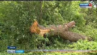 В Пензе дерево упало на остановку