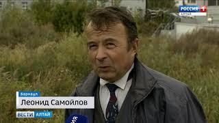 Стая диких уток поселилась на пруду в Барнауле