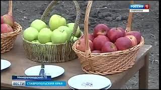Сады на Ставрополье будут растить по новым технологиям