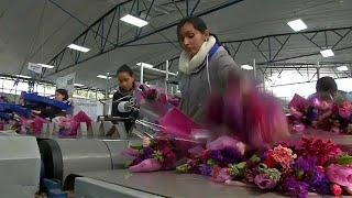 Бизнес, цветы и солидарность