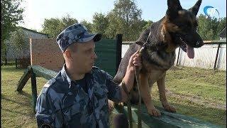 В новгородском УФСИН прошел очередной этап многоборья со служебными собаками