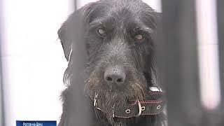 В Ростове начала работать первая очередь центра стерилизации бездомных животных