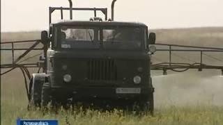 Азиатская перелетная саранча добралась до Ростовской области