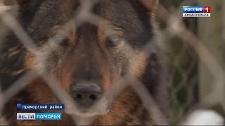 Приют для собак в Катунино ждёт переезд в никуда