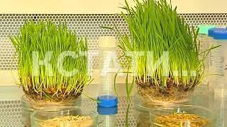 Нижегородские ученые зароют отходы в землю