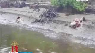 На севере Красноярского края полицейские задержали браконьеров