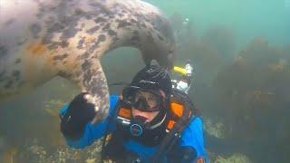 Дружба дайвера и тюленя