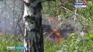 На Смоленщине продолжает гореть сухой травостой