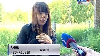 Проблема с безнадзорными животными остается актуальной для Кирова(ГТРК Вятка)