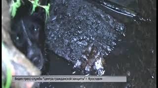 Сотрудники ЦГЗ спасли собаку из канализационного люка