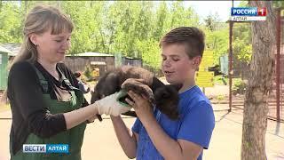 Как снимали детские «Вести Алтай»?
