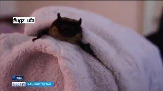 В уфимской квартире поселилась летучая мышь