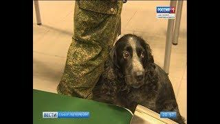 Вести Санкт-Петербург. Выпуск 20:45 от 16.10.2018