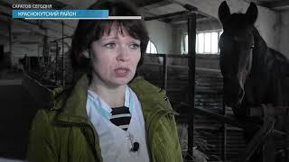 В Саратовской полиции из-за скандала со служебными лошадьми двое начальников уволены