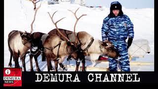 Инновации по-путински: Полицию Ямала и Чукотки снабдят оленями, южные регионы — верблюдами и ослами!
