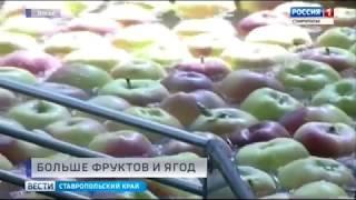 Площадь садов и ягодников на Ставрополье расширится