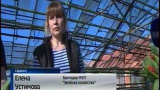 К Женскому дню саранское предприятие «Зелёное хозяйство» вырастит 20 тысяч тюльпанов
