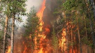 За выходные в Югре потушили 12 лесных пожаров