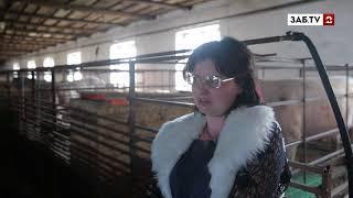 Управляющий фермой: Свиньи тоже получают маткапитал