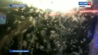 Полчища комаров и мошек атаковали жителей Алтайского края