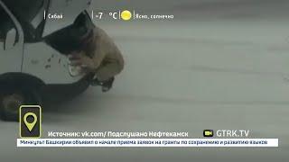 Мобильный репортер - 10.12.18
