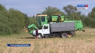 Хозяйства Костромской области активно включаются в уборку зерновых